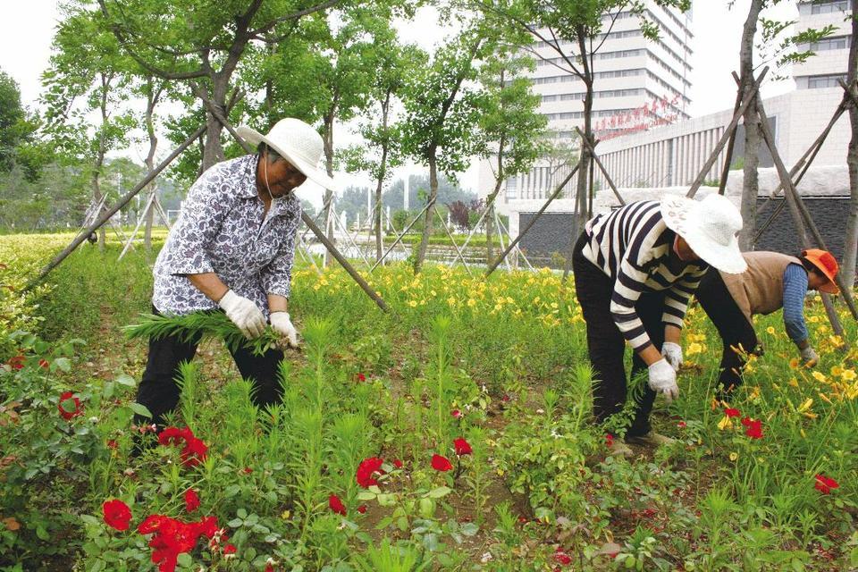 街头镇护水养绿打造生态绿色景观