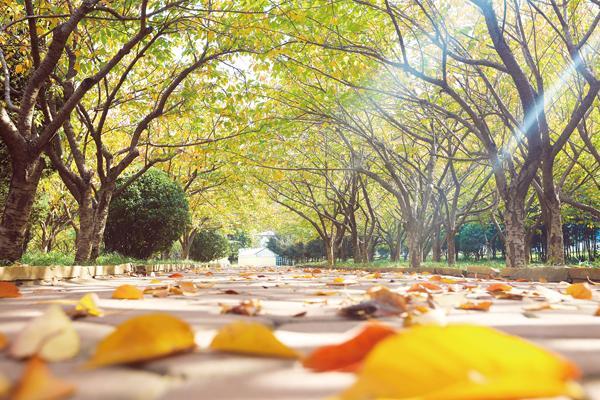 葡京开户秋天的色彩美醉了