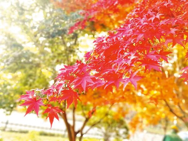 层林尽染 葡京开户的秋天简直美爆了!